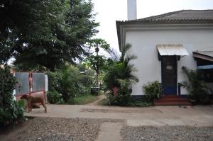 Pink Papaya house and dorm