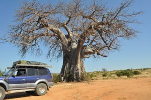 Baobab in Ruaha National Park