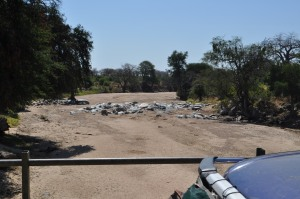 Ruaha National Park dry river