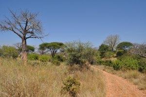 Ruaha National Park reserve scene