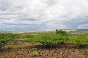 Sibioli vegetation